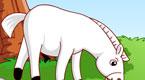 我的小白马