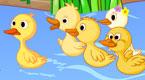 小鸭子学游水