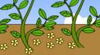 落花生和大豆