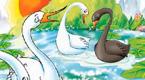 白天鹅和黑天鹅