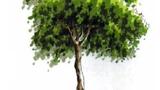 绿色的小树