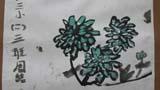 山上盛开的菊花