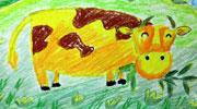 低头吃草的黄牛