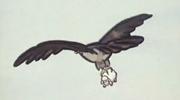 傲慢的乌鸦