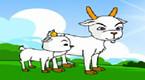 胆小的山羊