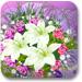制作情人鲜花