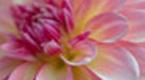 飞来的花瓣