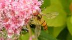 小蜜蜂采蜜忙