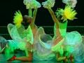 第六届华北五省少儿舞蹈比赛13