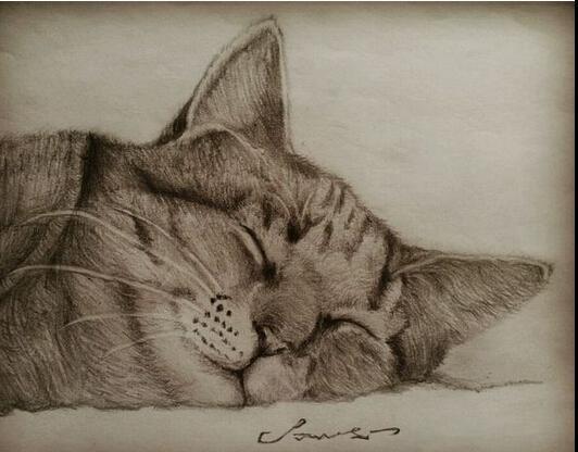 下面就让我们一起来欣赏一下关于小花猫的铅笔画作品吧.