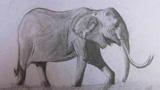 前行的大象