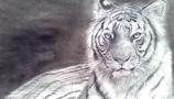 坐着的老虎