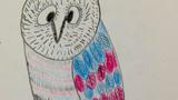 孤独的猫头鹰