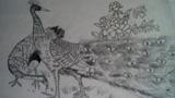 美丽的孔雀