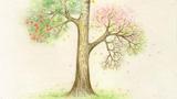 我的愿望树