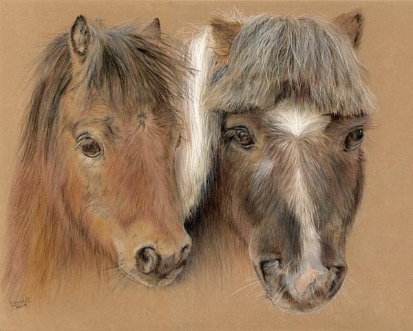 黑白铅笔动物画图片