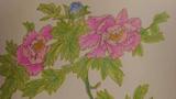 国色天香牡丹花