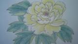 白色牡丹花