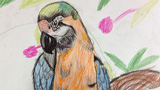 百鸟园的金刚鹦鹉