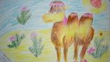 沙漠之舟骆驼