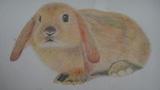 发呆中的兔子