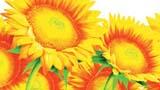 艳丽的向日葵
