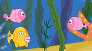 不会吐泡泡的鱼