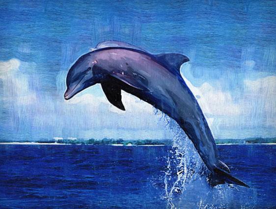海面鲸鱼简笔画