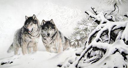 狼国家二级保护动物