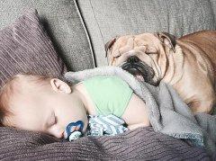 男童与狗狗亲似兄弟