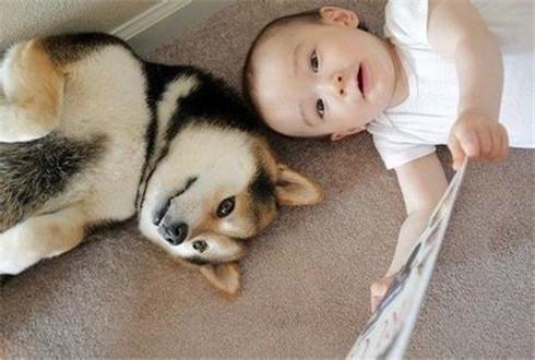 平常应注意宠物的安全与卫生